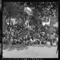 Crowds rest in shade at the Festival in Black, Los Angeles (Calif.)