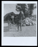 Wiley Hinds on his farm, Visalia vicinity (?), 1880-1914
