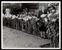 Dr. Vada Somerville beside a flower bed, 1950s-1960s