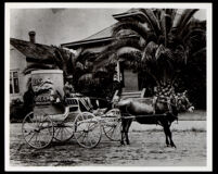 African American coach driver for a Pacific Creamery Co. carriage, 1905