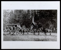 George Monroe, driving a stagecoach with around 7 passengers, circa 1870-1886
