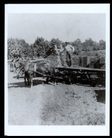 Worker standing on a wagon pulled by a mule team, Visalia vicinity (?), 1880s-1890s