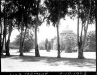 Vermont Avenue campus - Millspaugh Hall with eucalyptus trees, 1928