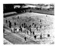 Snowfall on campus - Snowball fight on Esplanade, 1932