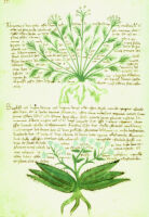 University of Vermont. Library. MS 2. [Italian herbal]