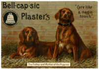 Bell-cap-sic Plasters [inscribed]