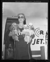 Joan Crawford arrives with 3 dogs in arm at Los Angeles International Airport, 1958