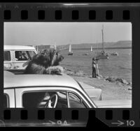 Dog poking head out of car sunroof as boats sail by at Marina del Rey, Calif., 1972