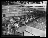 Production line of lettuce parkers in warehouse, Calexico, Calif., circa 1948