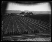 Orchards in Van Nuys, Calif.,