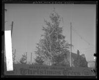 Sign and decorated tree in front of a Christmas tree lot in Los Angeles, Calif., 1928