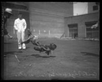 Cock fight with men looking on, Los Angeles, Calif.; circa 1920-1931