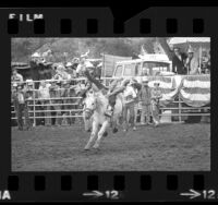 Paula Horton competing in bronco riding at Western States All-Girl Rodeo near San Diego, Calif., 1973