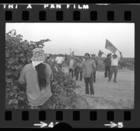 Flag waving United Farm Workers members talking with field worker at Carian Ranch in Coachella Valley, Calif., 1973
