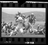 Los Angeles Rams running back Rob Scribner playing in scrimmage against Dallas Cowboys, 1973