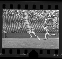 UCLA football player Norm Anderson in play, Los Angeles, Calif., 1973