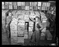 Two men standing amongst crates of illegal oranges in warehouse, Los Angeles, Calif., circa 1954