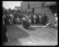 Dragon Dance puppet laid out on ground with spectators and Chinese performers playing drums around it, Los Angeles, Calif., 1929