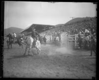Bull rider and spectators at the Baker Ranch Rodeo Saugus, Calif.