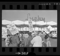 Striking meat cutters picketing outside a Lucky supermarket in Los Angeles, Calif., 1973