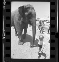 People watching Ringling Brothers and Barnum & Bailey Circus elephant being led from train in Los Angeles, Calif., 1975