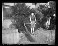 Lee Howard and Bertha Hernandez removing palm trees from Los Angeles Hall of Justice as part of war effort in 1942