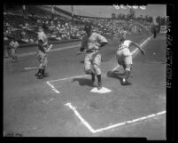 Frankie Baumholtz crossing home plate during Hollywood Stars vs Los Angeles Angels game, 1950