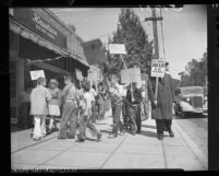 Children counter-picketing AFL pickets at market for their candy supplies in Altadena, Calif., 1948
