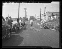 """Deputy Dwight Smith shown dragging a load of marijuana """"trees"""" from roadside patch in Rosemead, Calif., 1948"""