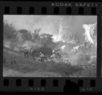 Los Angeles County fire camp crew hiking up hill as wildfire burns in background in Lake Sherwood area, Calif., 1976