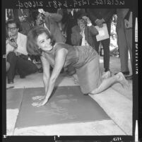 Sophia Loren pressing her hands into wet cement at Hollywood Walk of Fame, Hollywood (Los Angeles), 1962