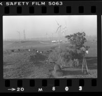 Wind turbines across cow pastures in the Altamont Pass, Calif., 1984