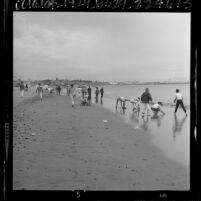 Children searching for sea shells along shoreline of Cabrillo Beach in San Pedro, Calif., 1964