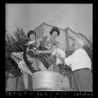 Man pouring grapes into tub as two women stomp on them for publicity for Italian Festival, Los Angeles, Calif., 1964