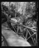 Know Your City No.103 Fern Dell in Griffith Park, Los Angeles, 1956