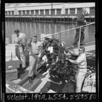 Police department personnel loading confiscated illegal weapons onto boat for disposal at sea in Los Angeles, Calif., 1965