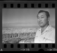 Ed Koda, son of rice king Keisaburo Koda, standing before rice fields in South Dos Palos, Calif., 1965