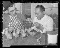 Los Angeles Times' roving misfit Abercrombie, eating Pidan century-old duck egg in Los Angeles' Chinatown, 1946