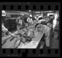 Fish cutters working at CHB Foods' tuna cannery in Los Angeles, Calif., 1985