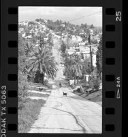 View looking down Eldred Street, steepest street with 33% grade in Los Angeles, Calif., 1986