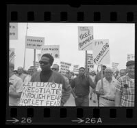 Municipal workers picketing during strike in Santa Monica, Calif., 1968