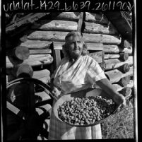 Eva Hendricks, a Miwuk Indian, with a tray of acorns in Tuolumne County, Calif., 1969