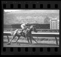 Jockey Bill Shoemaker riding in a race at Del Mar Race Track, Calif., 1970