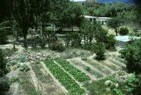 Oaxaca, garden, 1982 or 1985