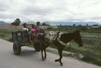 Oaxaca, horse pulling cart of children, 1982 or 1985