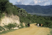 Oaxaca, man walking cattle down dirt road, 1982 or 1985