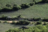 Oaxaca, aerial view of farmland and livestock, 1982 or 1985