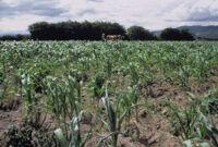Oaxaca, croplands, 1982 or 1985