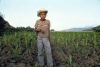 Oaxaca, boy in cropfields, 1982 or 1985