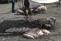 Oaxaca, pig market[?], 1982 or 1985